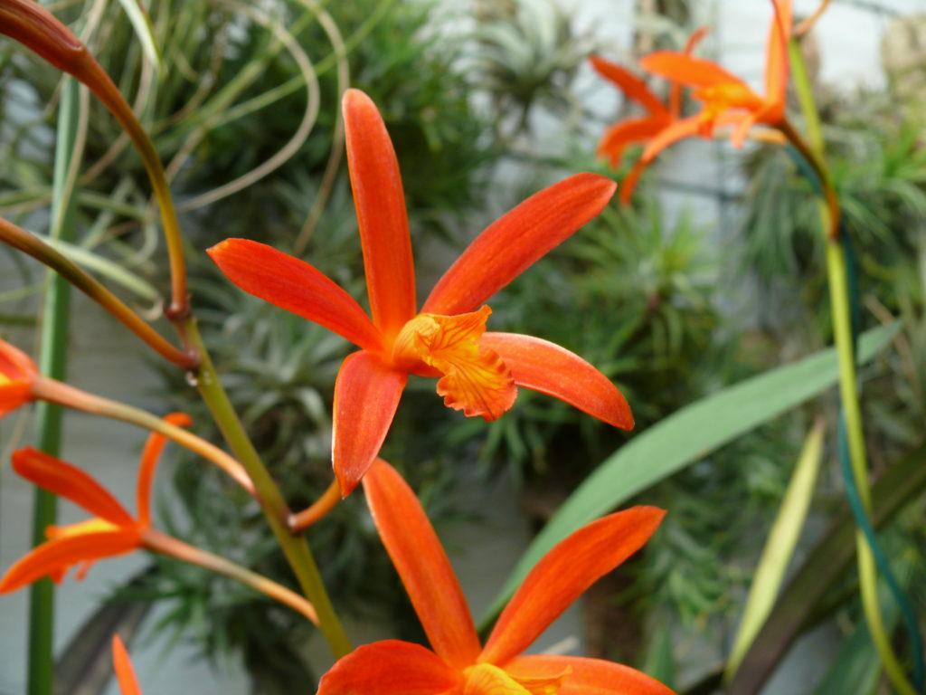 Aktuell Blühendes Orchideen Hessen Nassaude