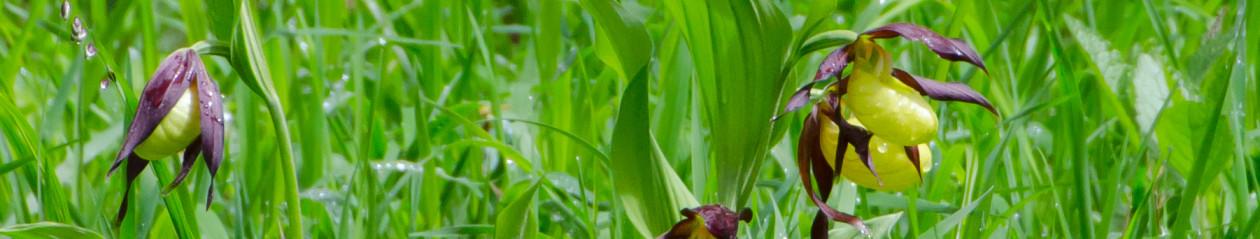 orchideen-hessen-nassau.de