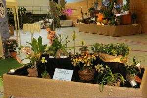 bewertungspflanzen