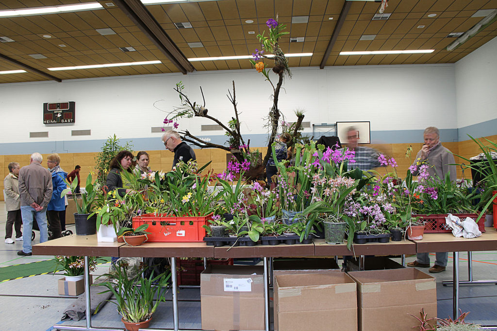 Pflanzen der Gruppe