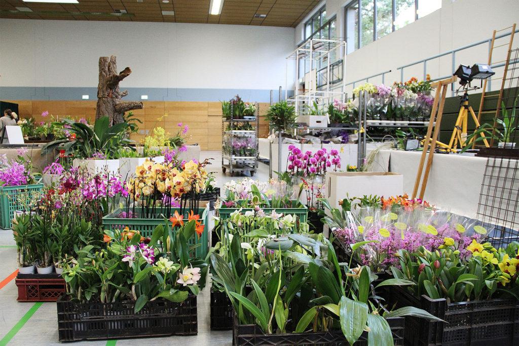 Die Halle mit Orchideen gefüllt
